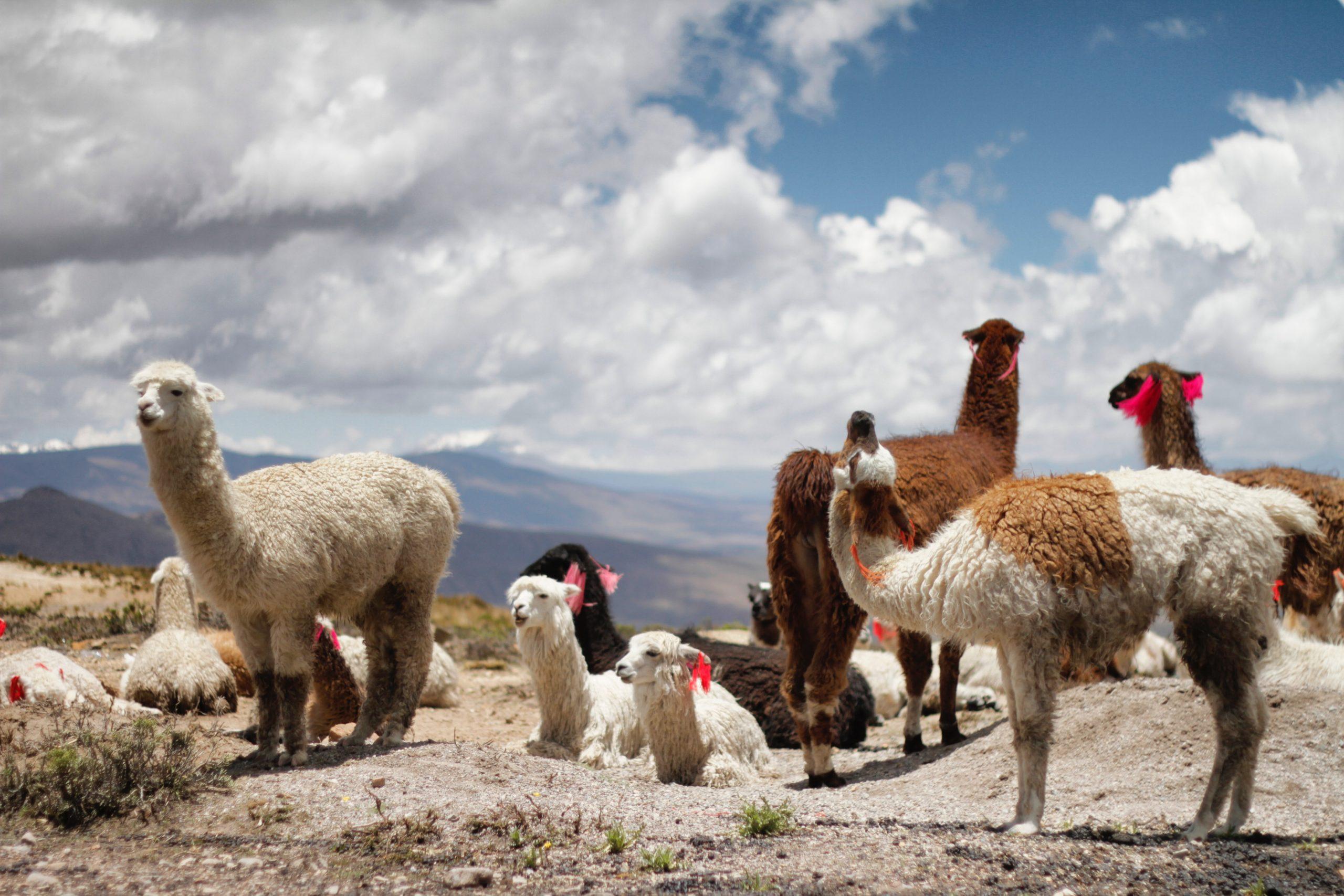 melhores lugares para viajar na América Latina: Machu Picchu