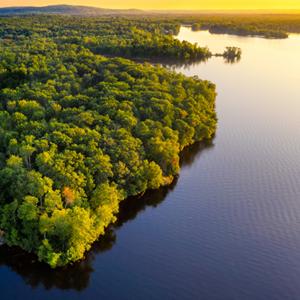 Amazonia Femingos